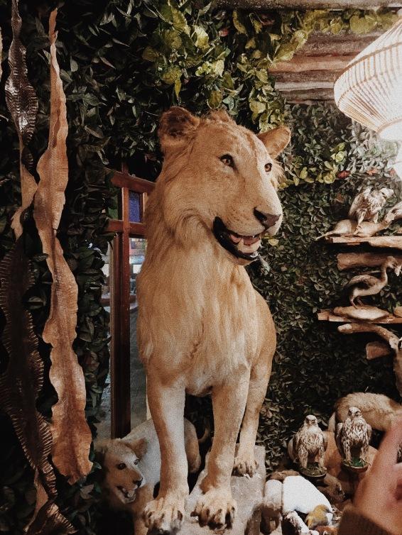 Ini dulunya singa hidup, lho, sebelum berakhir diawetkan. Hiiiii!